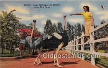 yan210049 - Miami, FL, USA Hugh Ostriches Postcard Post Card