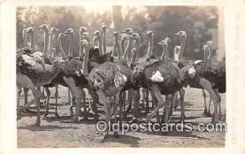 Cawston Ostrich Farm