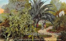 yan210059 - Cawston Ostrich Farm, USA Tropical Gardens Postcard Post Card