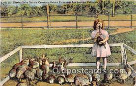 yan210069 - Los Angeles, CA, USA Kissing Baby Ostrich Postcard Post Card