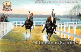yan210086 - Jacksonville, FL, USA Ostrich Race, Farm Postcard Post Card