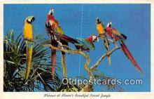 yan220002 - Miami, FL, USA Macaws, Parrot Jungle Postcard Post Card