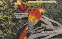 yan220016 - Macaws, Tropical Hobbyland Postcard Post Card