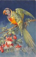 yan220049 - Artist Carlo Postcard Post Card