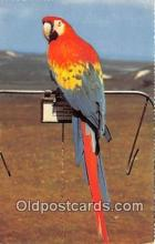 yan220055 - Color Transparency by Suschitzky Macaw Postcard Post Card