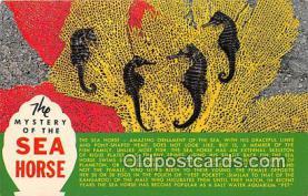 yan230019 - Sea Horse Postcard Post Card