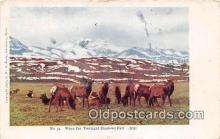 yan230021 - Elk Postcard Post Card