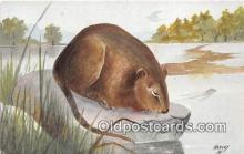 yan230027 - Harvey Muskrat Postcard Post Card