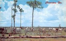 yan230033 - Clewiston, FL, USA  Postcard Post Card