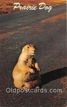 yan230036 - Wyoming, USA Prairie Dog Postcard Post Card
