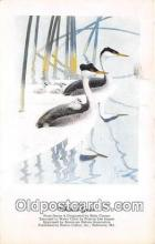 yan230048 - Western Grebe Postcard Post Card