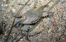 yan230057 - Galveston, TX, USA Blue Crab Postcard Post Card
