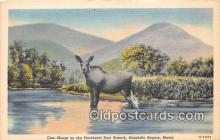 yan230058 - Katahdin Region, Maine, USA Cow Moose Postcard Post Card