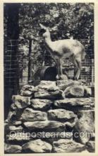 zoo001002 - Postcard Post Cards Old Vintage Antique