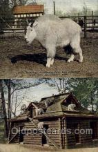 zoo001004 - Rocky Mountain Goat & Shelter, New York Zoological Park New York, USA Postcard Post Cards Old Vintage Antique