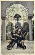zoo001007 - Chimpanzees riding Kiddie Kar, St Louis Zoological Park St Louis, MO, USA Postcard Post Cards Old Vintage Antique