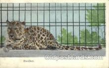 zoo001029 - Panther  Postcard Post Cards Old Vintage Antique