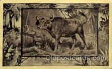 zoo001034 - African Buffalo Southern Africa Postcard Post Cards Old Vintage Antique