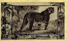 zoo001035 - Leopard Africa Postcard Post Cards Old Vintage Antique
