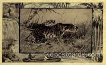 zoo001036 - Tiger  Postcard Post Cards Old Vintage Antique