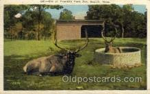zoo001037 - Elk, Franklin Park Zoo Boston, MA, USA Postcard Post Cards Old Vintage Antique