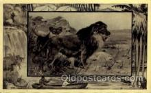 zoo001043 - Lion Africa Postcard Post Cards Old Vintage Antique