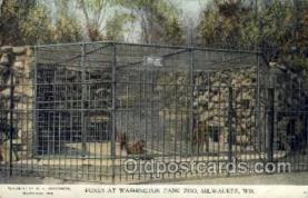 zoo001044 - Foxes, Washington Park Zoo Milwaukee, WI, USA Postcard Post Cards Old Vintage Antique