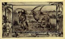 zoo001071 - Antelope  Postcard Post Cards Old Vintage Antique