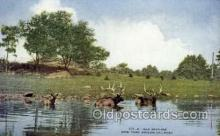 zoo001093 - Elk Bathing, New York Zoological Park New York, USA Postcard Post Cards Old Vintage Antique